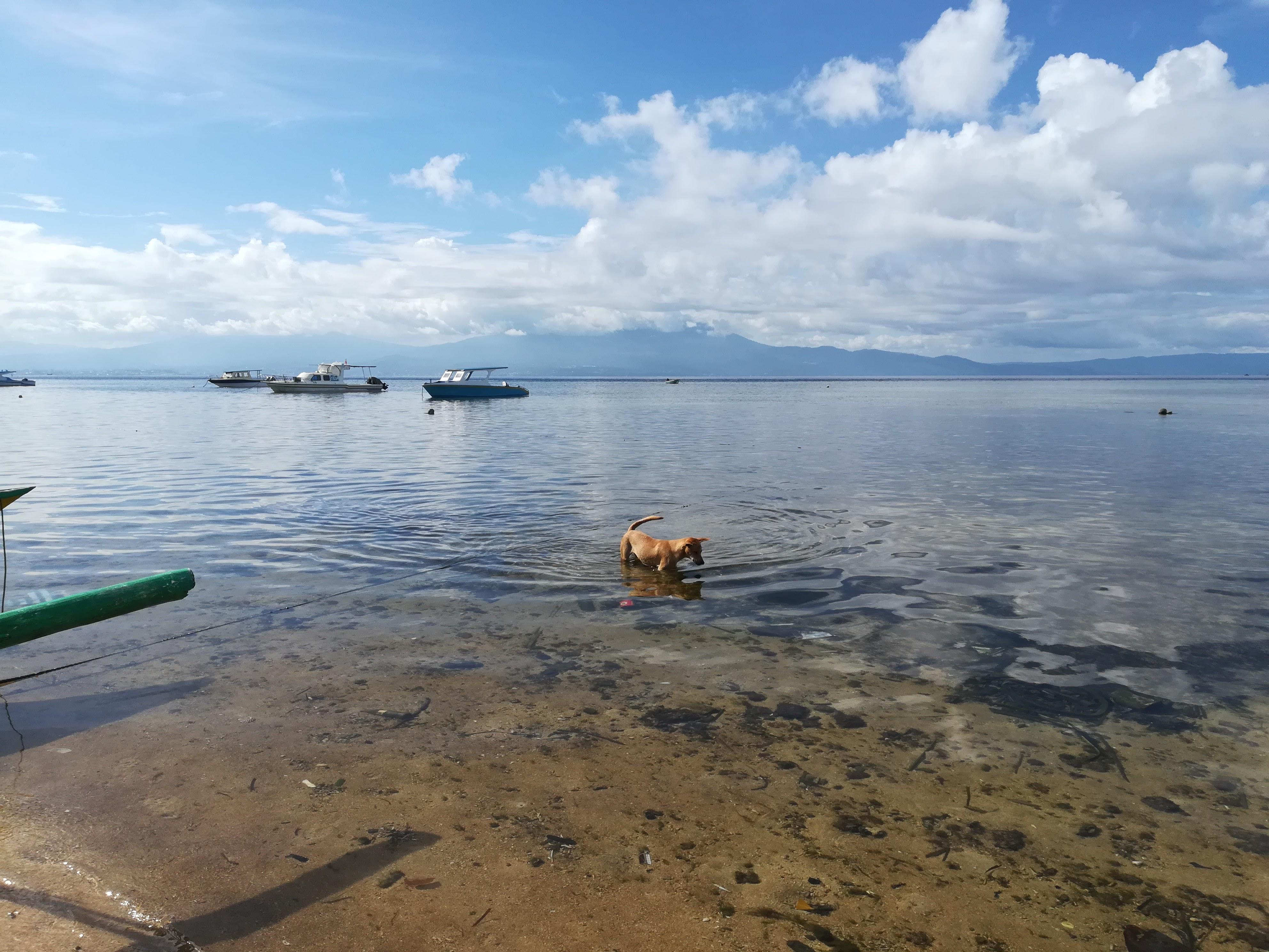 perro en el agua de bunaken
